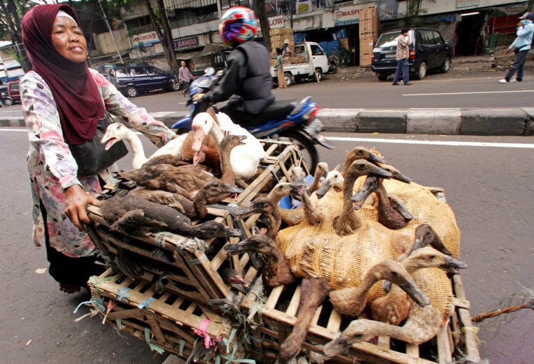 Indonesian woman pushes cart containing ducks to be sold at local market in Jakarta