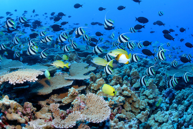 Conservationists say that Northwestern Hawaiian Island reefs like this one, near French Frigate Shoals, are threatened by commercial fishing.