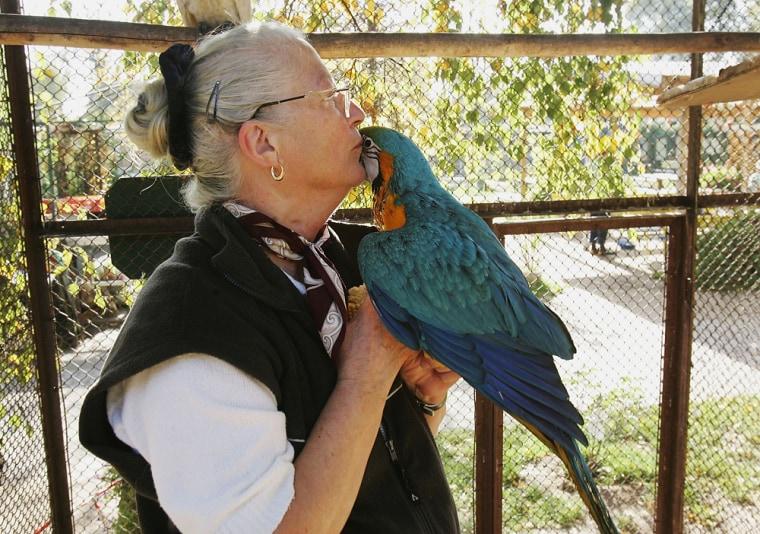 Bird Park Owners Cope With Anti Bird Flu Measures