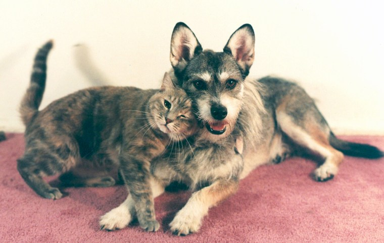 Ginny, a schnauzer-Siberian husky mix, relaxes with Blondie, the cat he lived with in Long Beach, N.Y., in the home of Philip Gonzalez in 1996. Ginny, who died in August, will be eulogized at the Westchester Cat Show.