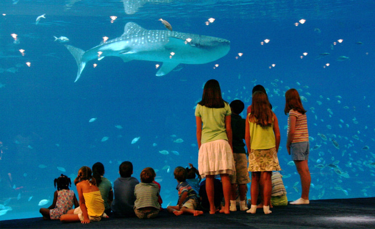 The children of staff members at the Georgia Aquarium watch a shark in one of the tanks at the yet-to-be-opened facility in Atlanta.