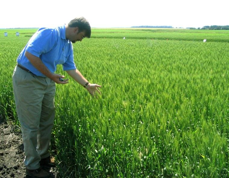 File photo of Monsanto's Michael Doane in North Dakota wheatfield