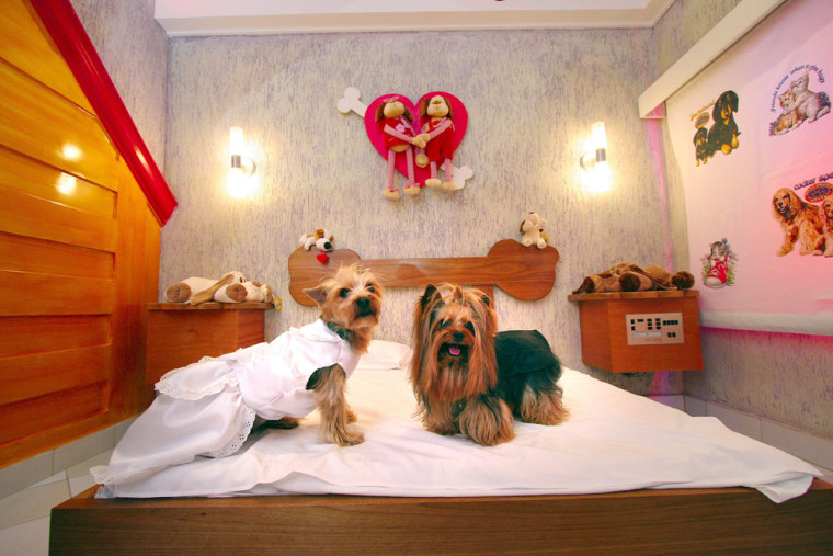 File photo of Yorkshire terriers in a pet motel in Sao Paulo