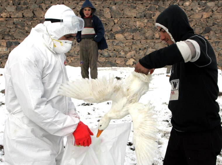 A local resident and a Turkish Agriculture Ministry employee collect poultry for culling in a villagenear the eastern Turkish town of Dogubayazit on Wednesday.