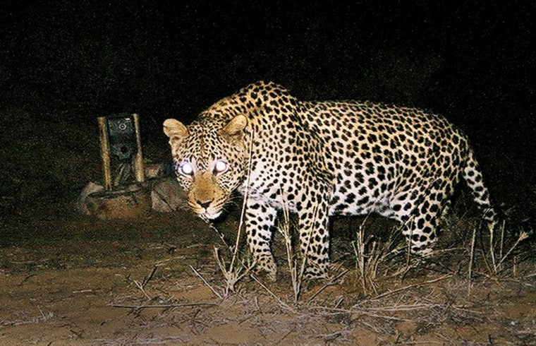 To match feature Environment-Leopards