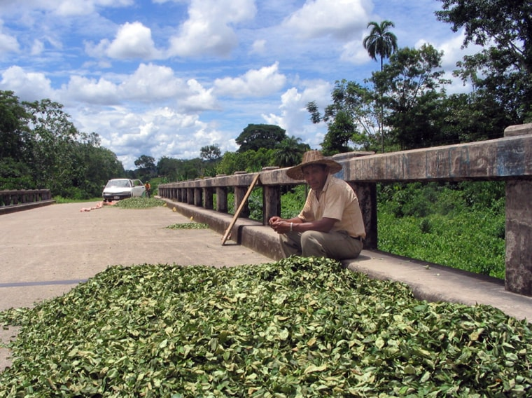 Coca farmer Santiago Urena dries his crop on a bridge in the Chapare region of Bolivia. Urena said he hopes for increased cultivation limits now that Evo Morales, a former coca grower, has been elected president.