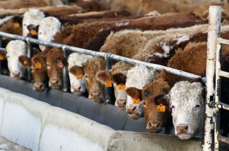 Canadian ranchers were hit hard after theU.S. banned cattle imports in May 2003 following the country's first case of mad cow disease.