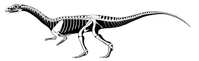 Undated illustration of newly discovered early crocodile-like reptile