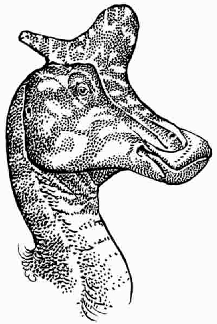 Scientists have speculated for yearsabout the purpose of the lambeosaur's unusual crest, shown in this artist's conception.