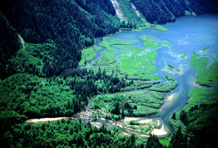 A coastal piece of the Great Bear Rainforest is seen in this aerial photo.