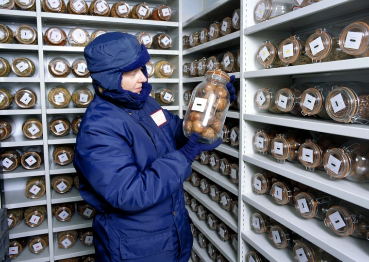 A researcher at the Millennium Seed Bank in London inspects a jar of large seeds placed in cold storage.