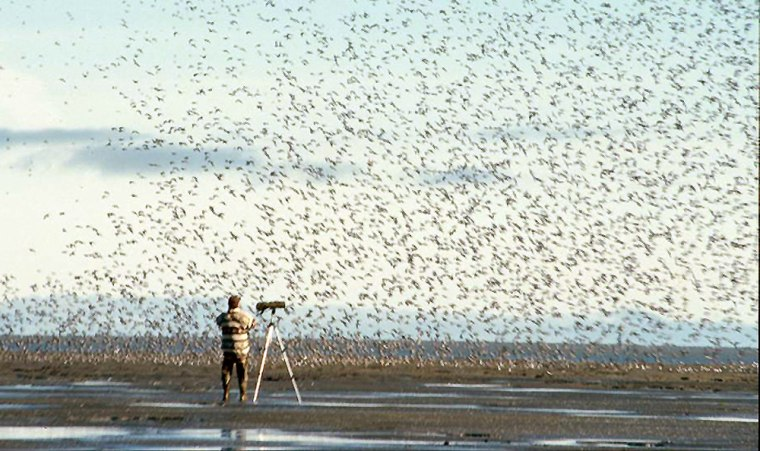 The spring migration of birds from Asia to Alaska is expected to start next month, and this year it will encounter a beefed-up federal effort to look for bird flu.