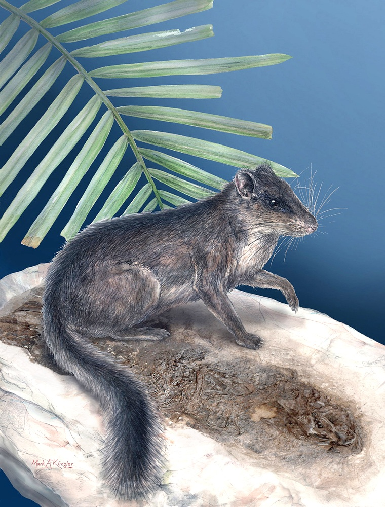 This squirrel-like rodent was first believed to be a new species, but scientists say it is actually the only living representative of the otherwise extinct Distomydae family of rodents.
