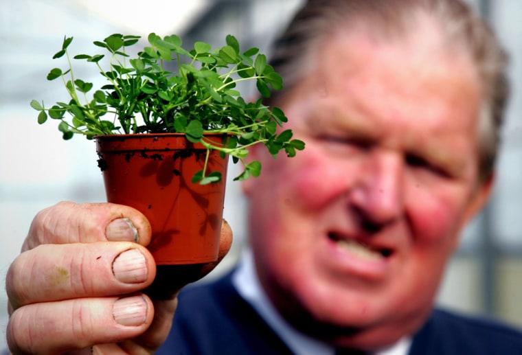Cecil Geddis of Hoophill Nurseries inBanbridge, Northern Ireland holds a pot of the shamrocks he ships worldwide.