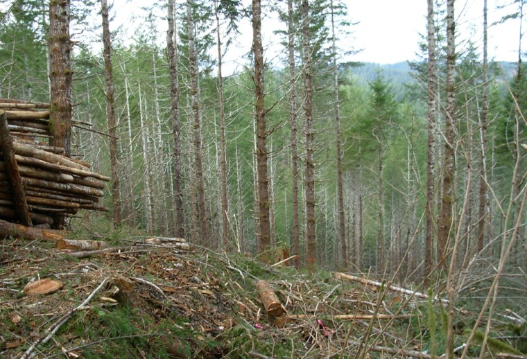 Part of the Siuslaw National Forest in Oregon was logged as part of a thinning project. Actively managed forests could help cool the planet, a new life cycle analysis study suggests.