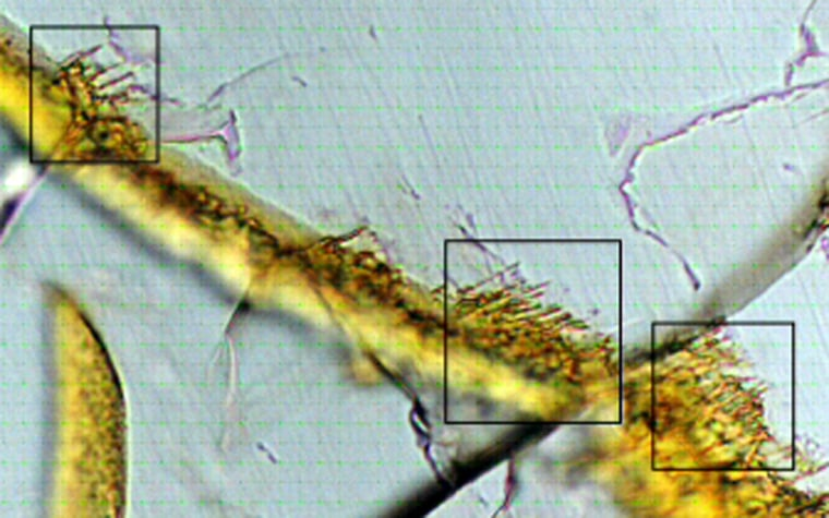 Thismicroscopic view highlights structures within a thin slice of theNakhla meteorite from Mars. A fracture (tan) and tunnels (in boxes) are similar in size and shape to the tunnels associated withbacterial activityin terrestrial rocks. How these were formed is not known, however; no DNA was found.