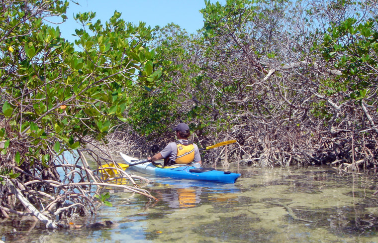 Associated Press reporter Brian Skoloff paddles his kayak into a mangrove-lined canal on Raccoon Key, Fla. Visitors who kayak on Keys shallow waters can enjoy a plethora of flora, fauna and underwater life in the unique ecosystem.