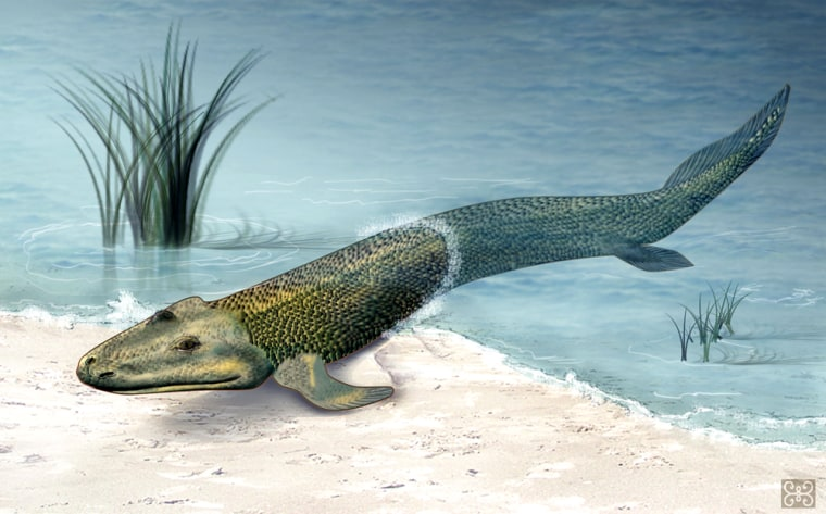 An artist's conception shows what the ancient croco-fish creature known as Tiktaalik roseae might have looked like 375 million years ago.
