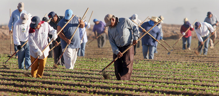 Migrant farm workers from Mexico work in a San Luis, Ariz., lettuce patch in this file photo. Onestudy suggests that the huge influx of immigrants since 1980 has boosted the average wage of U.S.-born workers.