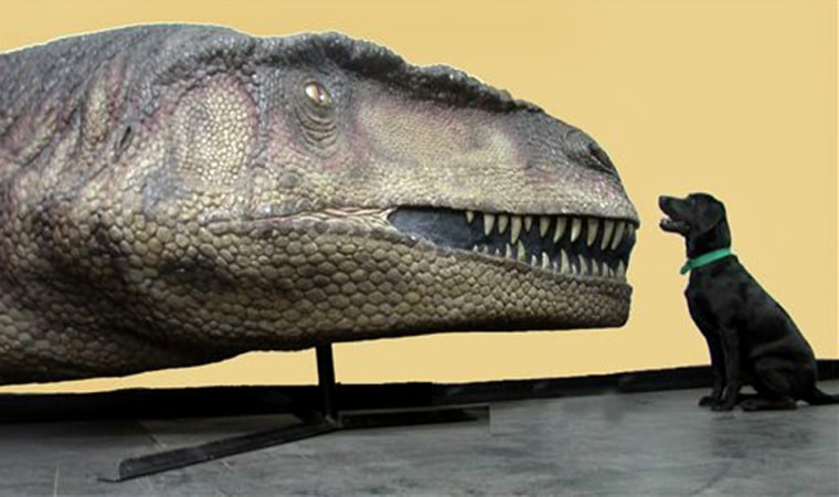 A dog sits by a replica of the head of a Mapusaurus roseae at the Carmen Funes Museum in Plaza Huincul, Argentina, in this undated photo. The dog's relative size to the head gives a senseof how huge the Mapusaurus is believed to have been.
