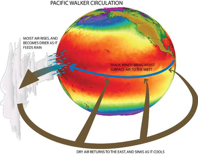This illustration show how the loop of circulating wind over the Pacific Ocean known as the Walker circulation works.