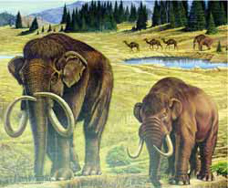In this artist's conception, a mammoth and a mastodon roam a Pleistocene landscape, with camels in the background. Scientists say such creatures passed away from North America thousands of years ago.