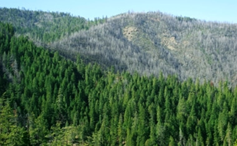 Mike's Gulch, a burned area within the Rogue River-Siskiyou National Forest in Oregon that will be up for a salvage timber auction, is seen in the background.