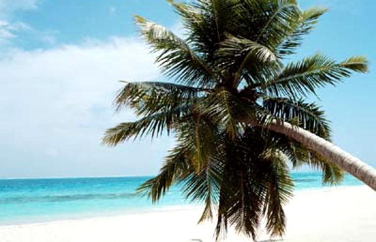Palm Tree Leaning Over a Beach