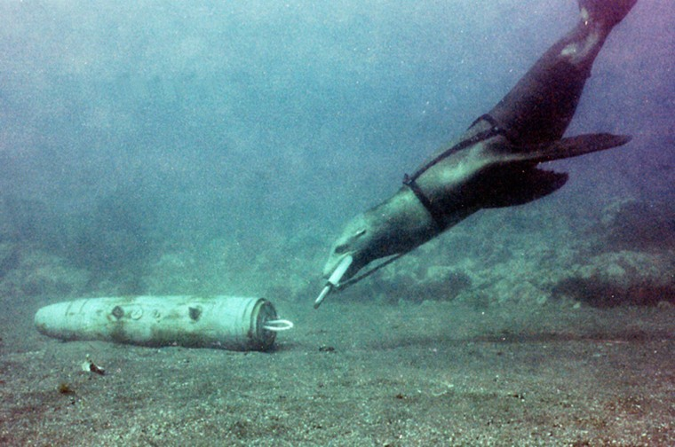 A trained sea lion locates a practice target during an underwatermine-clearing drill.