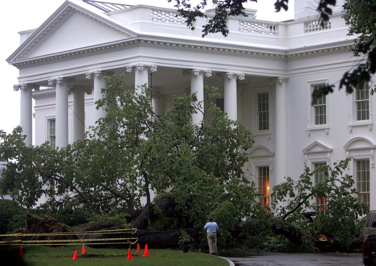 A 100-year-old elm tree outside the White House was toppledovernight by heavy rain and winds.