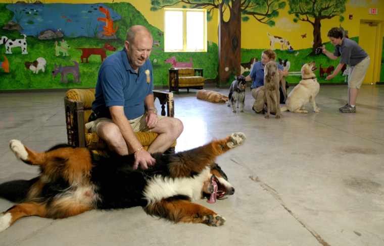 Hank Miller owner of Boom Towne Canine Center plays with his dog, Niles, in the day care room in Farmington, N.Y. Miller's business offers boarding, day care, grooming, and training services.