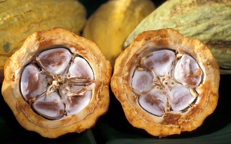 Cocoa beans lie within a cross-section of a cacao pod. Althoughtropical countries tend to be the world's biggest cocoa producers, the finished chocolate doesn't stand up to the tropical heat. Now Nigerian researchers have come up with a heat-resistant formula that preserves the milk-chocolate taste.