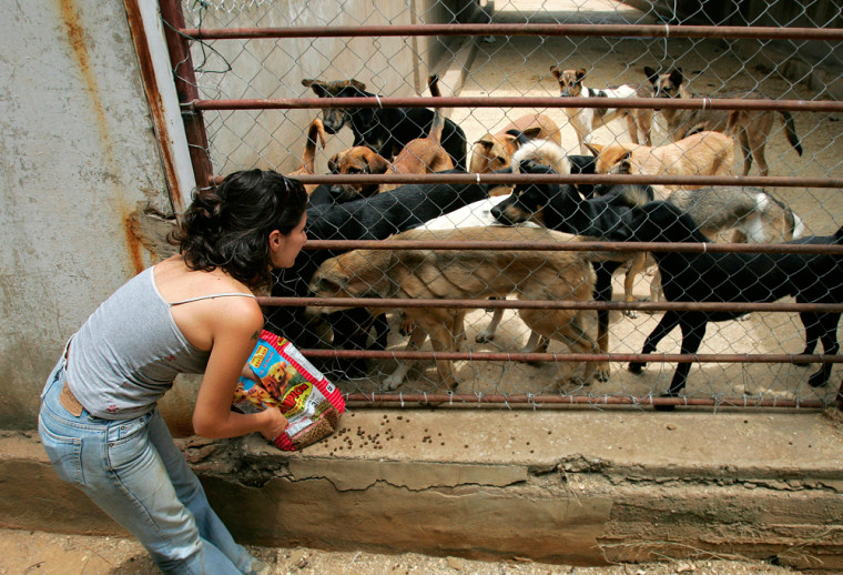 Beirut for the Ethical Treatment of Animals (BETA) co-founder Joelle el-Massih feeds dogs Tuesday at a farm in Monteverde, 9 miles east of Beirut, Lebanon.
