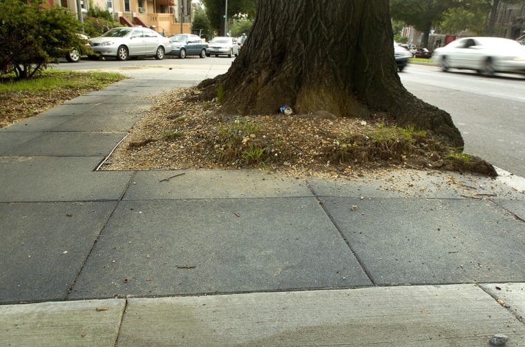 A rubberized sidewalk surrounds a large tree in Washington. Dozens of communities around the country are turning to rubberized sidewalks as they face shrinking landfill space and a maturing urban landscape.