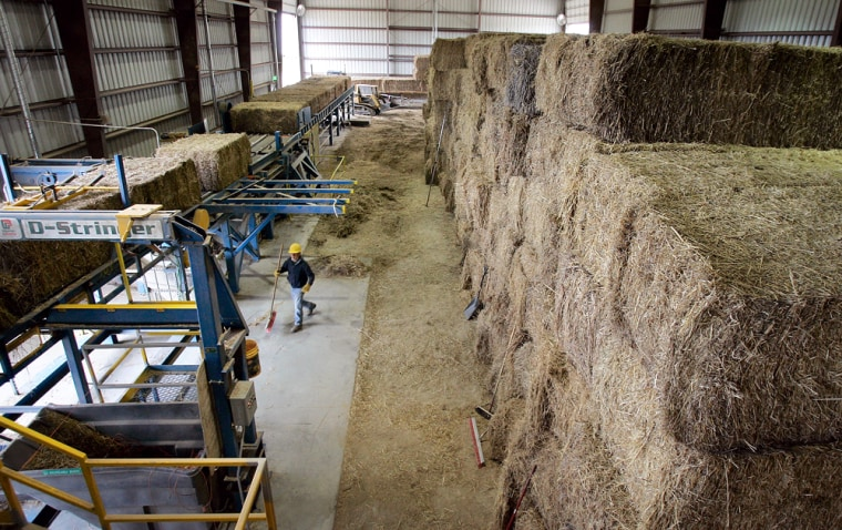 Bales of switchgrass sit waiting to be processed and burned to make electricity at the Alliant Energy Co. power plant in Chillicothe, Iowa. Since Feb. 23, Alliant has replaced 5 percent of its coal with switchgrass at the plant, located about 80 miles southeast of Des Moines.