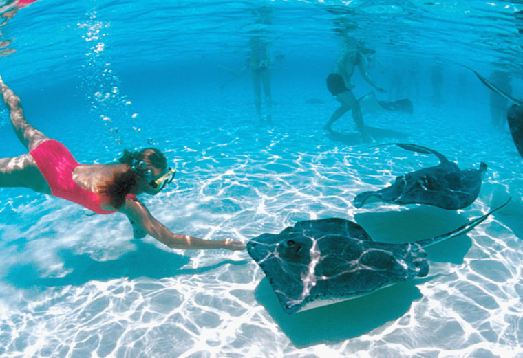 A woman reaches out to touch a stingray, while on an excursion from a cruise.