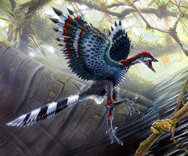 Archaeopteryx, shown here in an artist's depiction, has long been considered theearliest bird whose fossils have been found, going back 60 million to 65 million years ago. Butbiologists say DNA datingputs the origins of birds farearlier than Archaeopteryx's day.