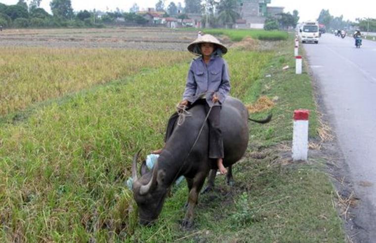 Girl riding a water buffalo