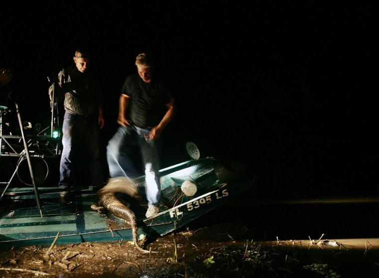 Alligator Hunting Season Begins In Florida