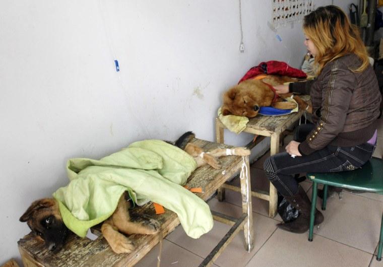 Pet dogs receive medical treatment inside pet hospital in Xiangfan