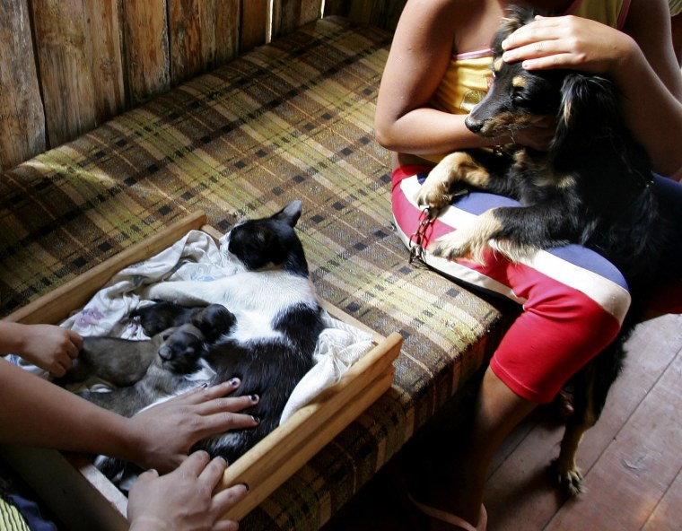 Brazilian Aline da Silva holds her dog, named Dog, as her neighbour's cat Mimi nurses what its owner Cassia Aparecida de Souza claims are Mimi's own offspring born with dog traits