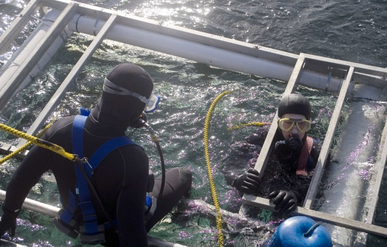 Tourist divers plunge in a shark diving cage off the Farallon Islands 26 miles west of California's coastline