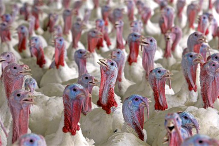Thanksgiving chefs can still turn to the famous Turkey Talk-Line despite the sale of ConAgra Foods Inc's iconic Butterball brand to privately held Carolina Turkey in October. The company claims consumers won't notice the change this Thanksgiving as service will remain as smooth as ever.