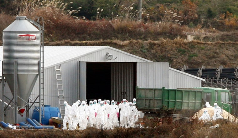 South Korean quarantine officials began slaughtering more than 200,000 poultry after an outbreak of the virulent H5N1 form of bird flu at a chicken farm, the agriculture ministry said.