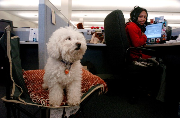 Arnitre Rosser checks on Charmin, her 6-year-old Bichon, while at work at Replacements, Ltd. in Greensboro, N.C. The company allows dogs to be brought work to encourage mental wellness.