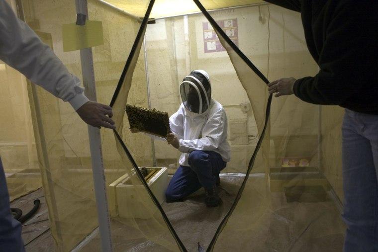Los Alamos Laboratory Trains Bees To Detect Explosives