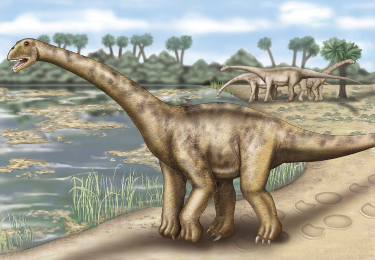 An artist's conception shows what one of the largest vegetarian dinosaurs, Turiasaurus riodevensis, might have looked like 150 million years ago in what is now Spain. The creature is thought to have weighed more than 40 tons. By comparison, Tyrannosaurus rex weighed about 6 tons.