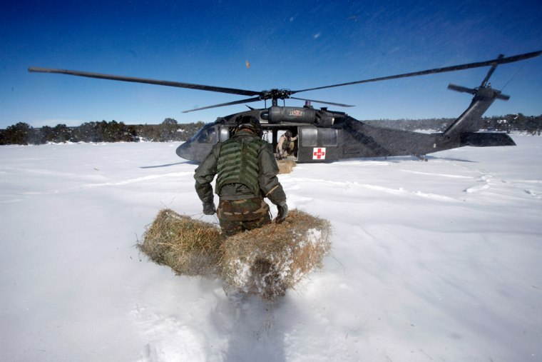 New Mexico National Guard First Sgt. Rob Farris carries hay bales through thigh-deep snow to a waiting Black Hawk helicopter in Clines Corners, N.M., on Wednesday. The bales would later be dropped to help feed stranded cattle.