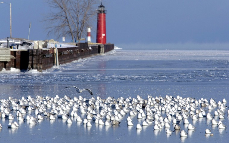 Hundreds of gulls huddle for protection from cold air on the harbor ice in Kenosha