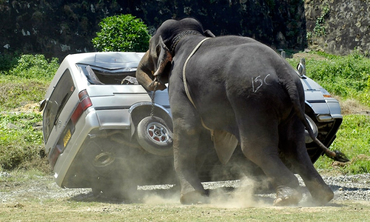 An elephant destroys a minibus after throwing it's rider and going on a rampage